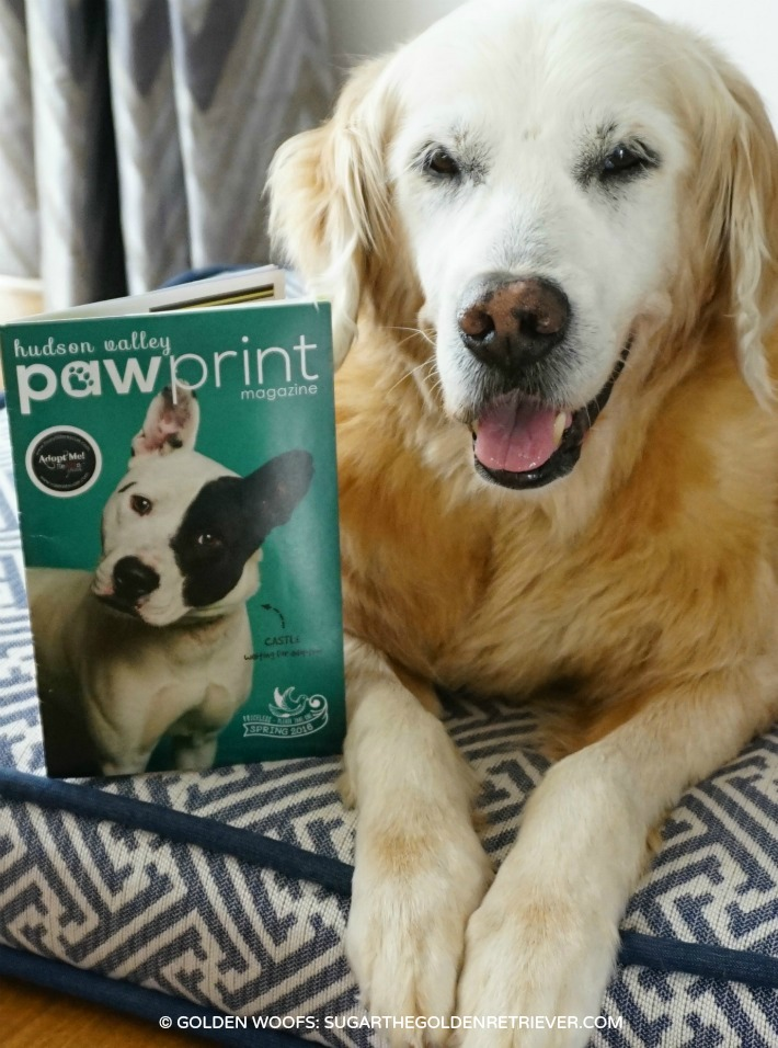 featured in paw print magazine