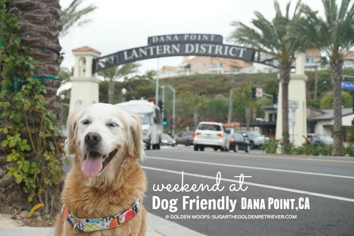 Weekend At Dog Friendly Dana Point CA
