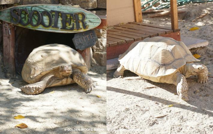 westin pets tortoises