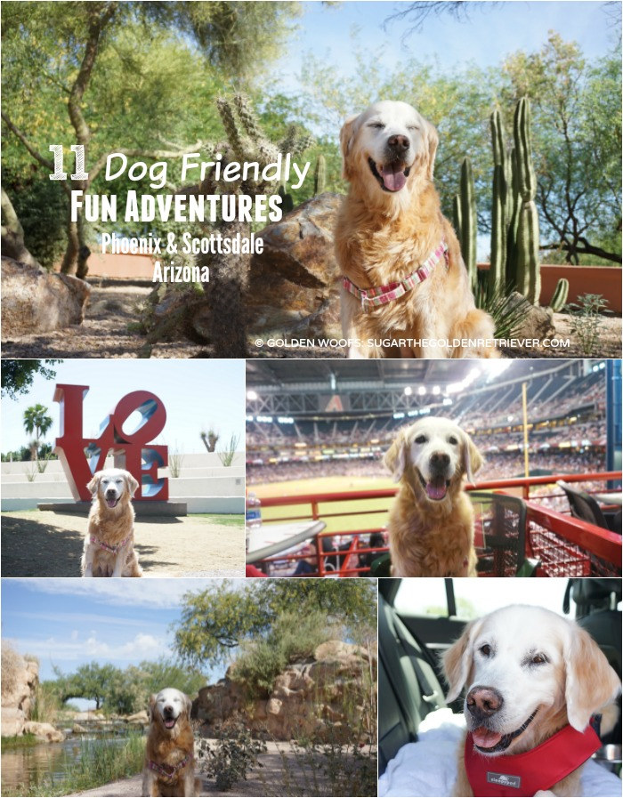 Dog friendly fun adventures