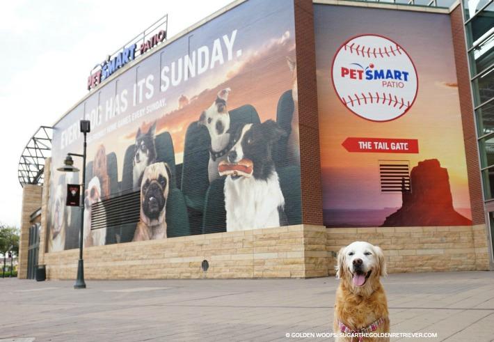 Every dog has its Sunday