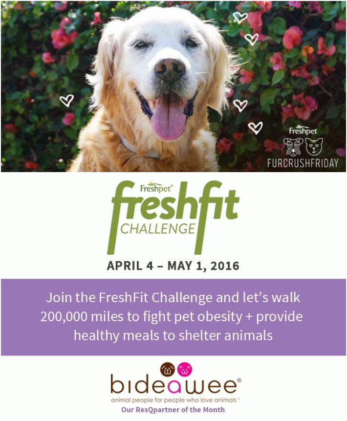 FreshFit Challenge ResQwalk