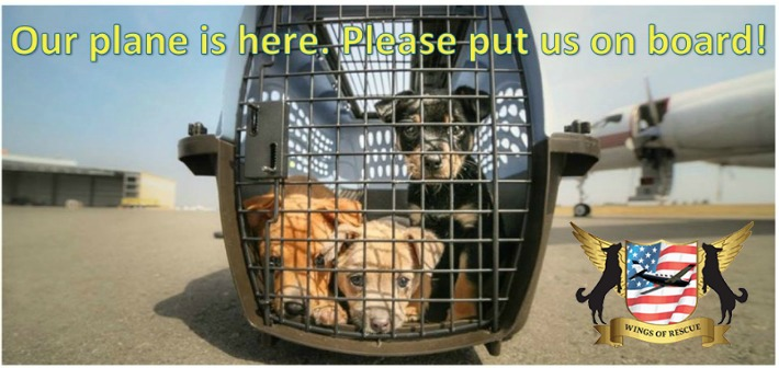 Wings of Rescue Saving Shelter Pets
