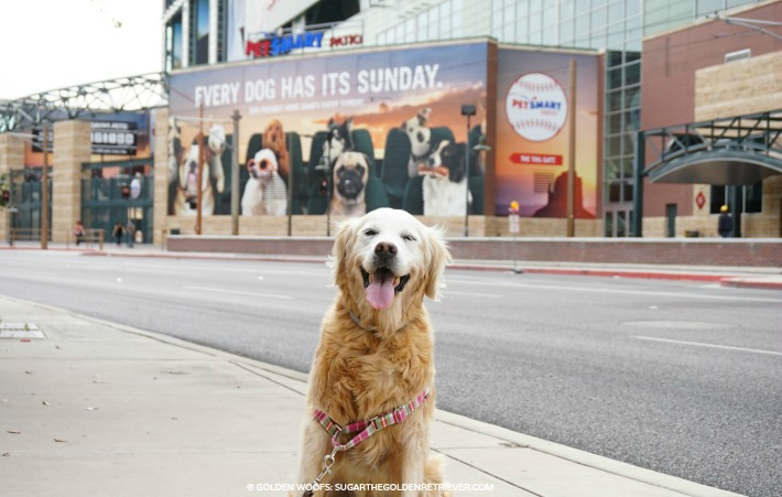 Every Dog Has Its Sunday at PetSmart Patio
