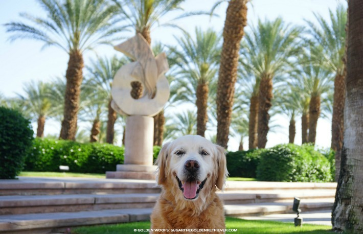 dog friendly palm springs westin mission hills