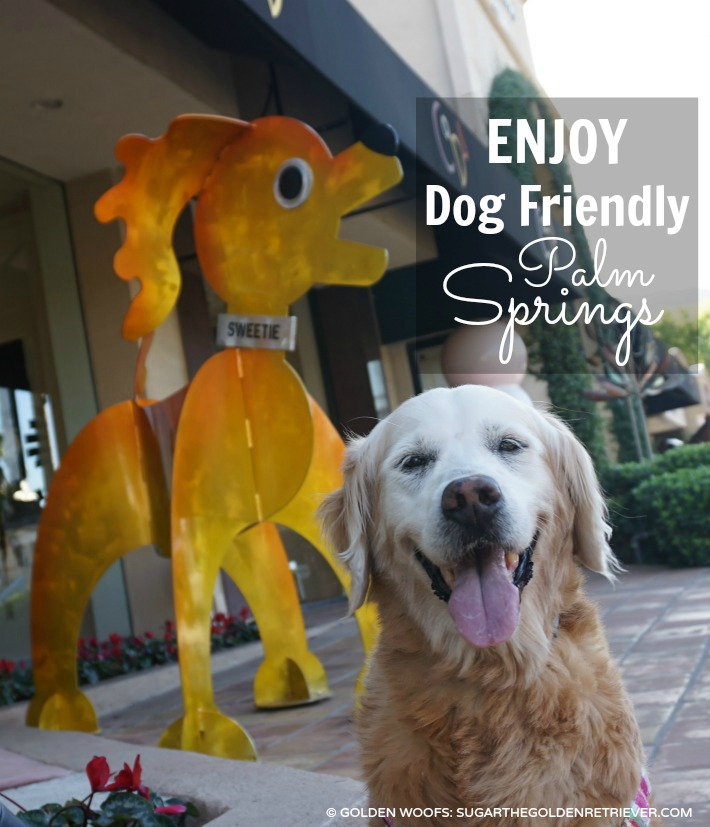 dog friendly palm springs