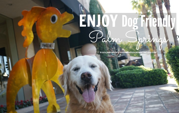 7 Ways to Enjoy Dog Friendly Palm Springs