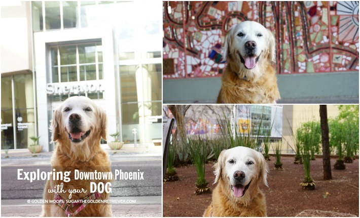 Exploring Downtown Phoenix with Your Dog