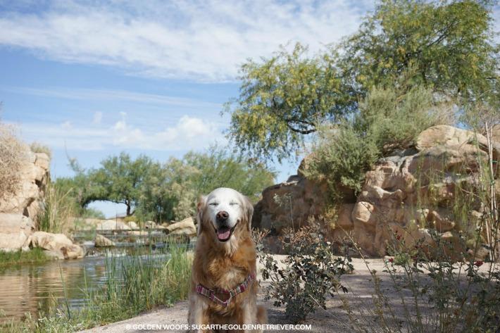 see beautiful views arizona