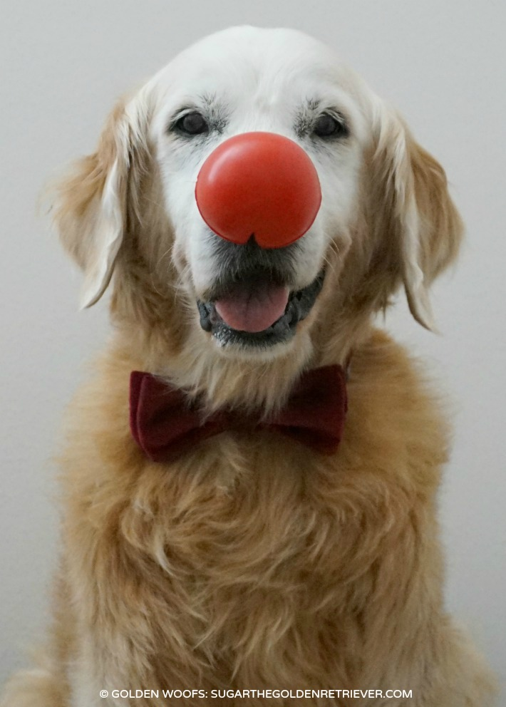 DOG Red Nose Day
