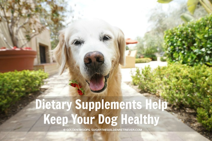 Dietary Supplements Help Keep Your Dog Healthy