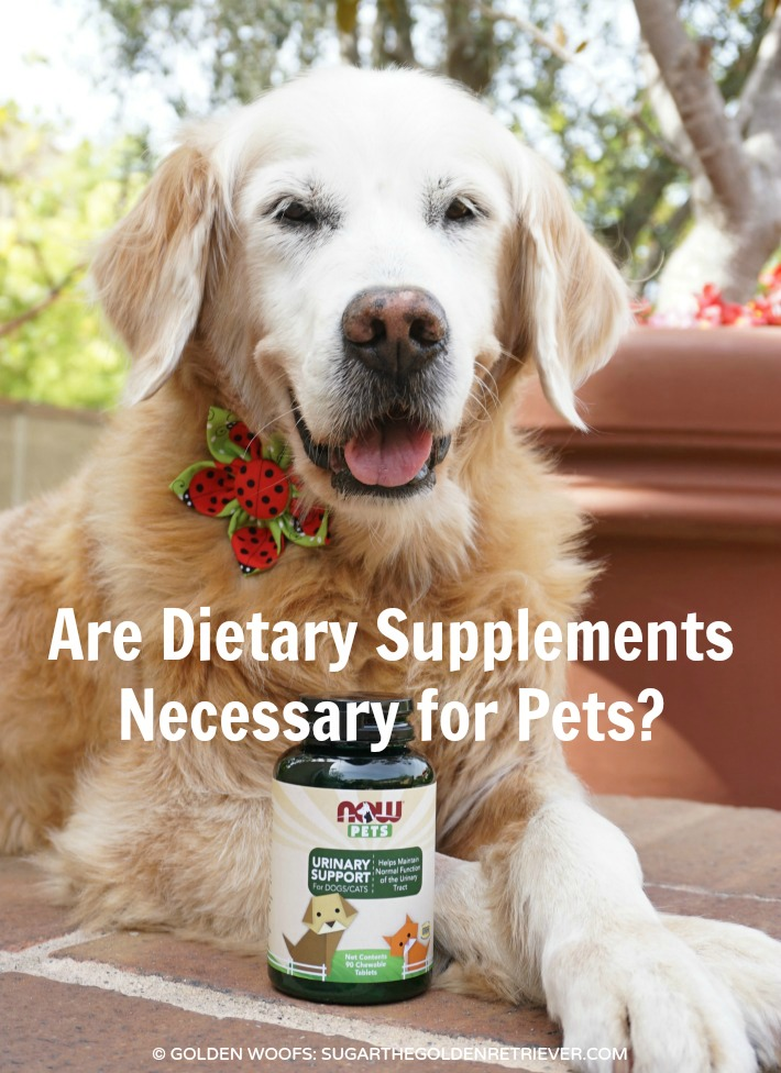Are Dietary Supplements Necessary for Pets