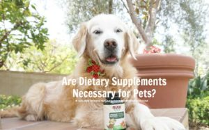 Are DietarySupplements Necessary for Pets?