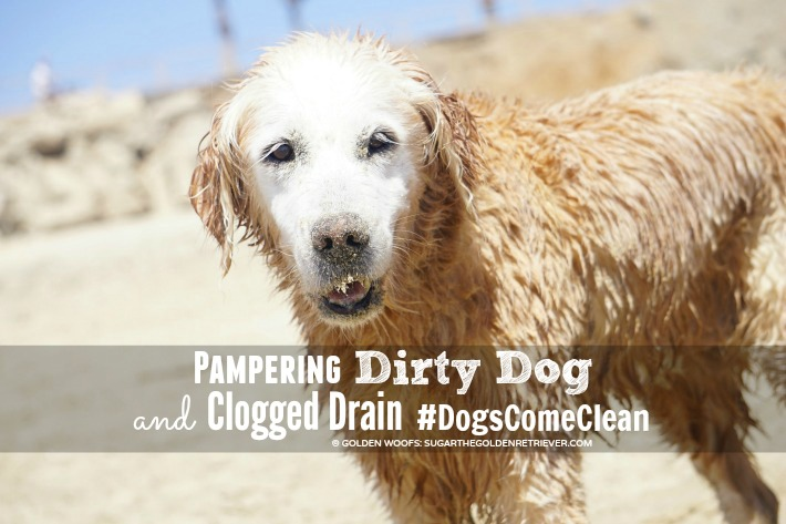 Pampering Dirty Dog and Clogged Drain #DogsComeClean