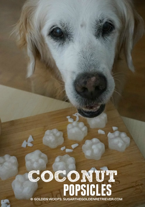 coconut popsicles pawsicles
