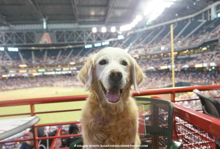 dog friendly Arizona dbacks