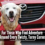 Zoom Zoom Dog Friendly Car Ride #DriveMazda