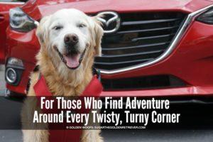 dog friendly car Mazda3 5-door