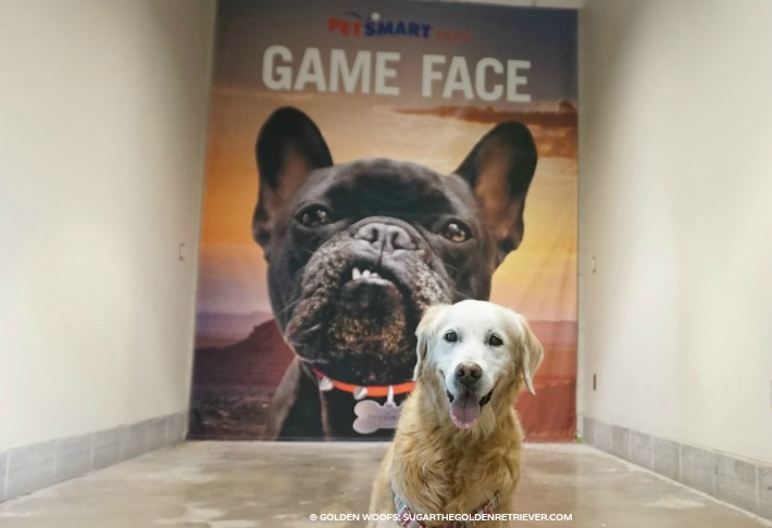 game face chase field PetSmart Patio