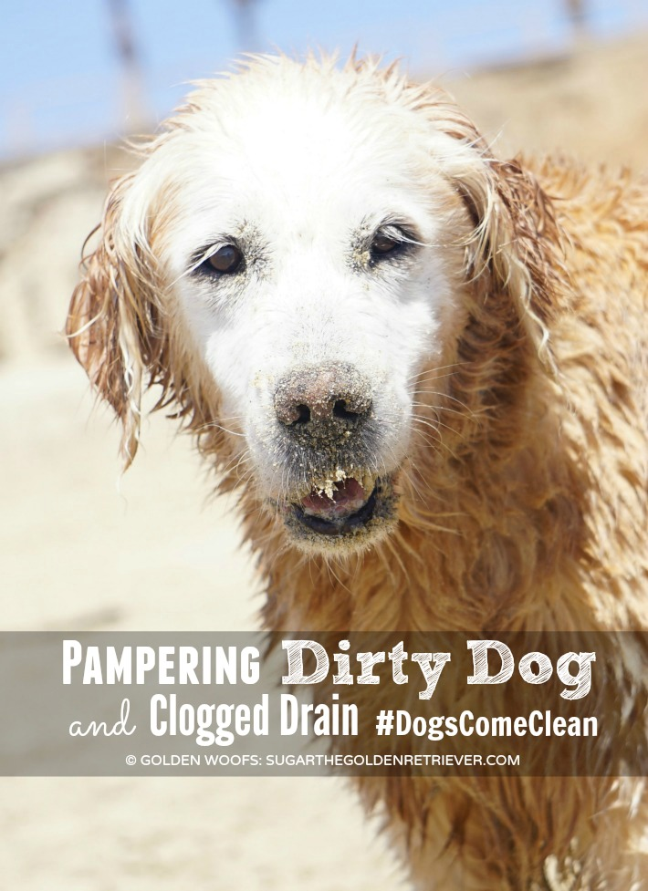 pampering dirty dog Dogs Come Clean