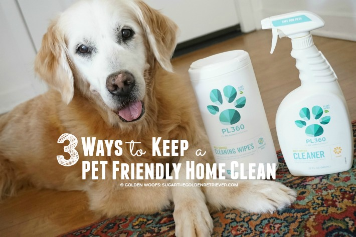 3 Ways to Keep a Pet Friendly Home Clean