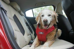 pet travel safety sleepypod