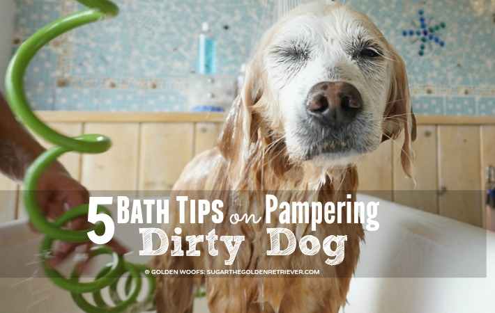 tips pampering dirty dog
