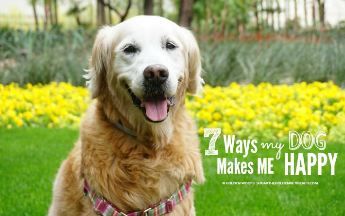 7 Ways My Dog Makes Me Happy