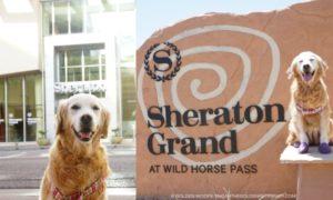 Arizona Sheraton Grand