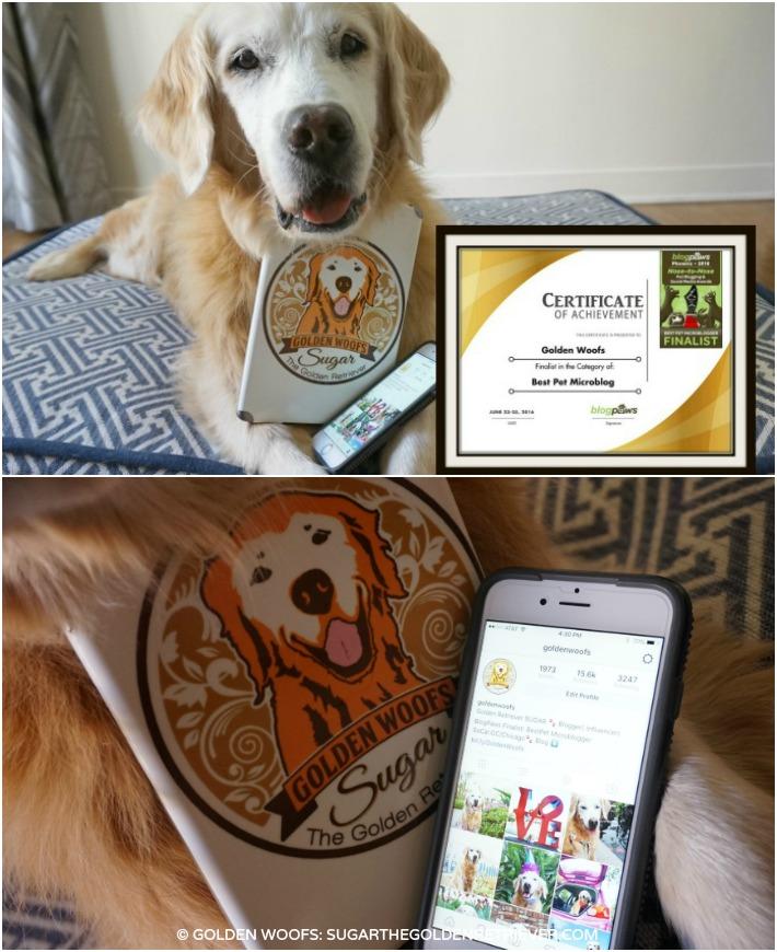 BlogPaws Finalist Best Pet Microblog