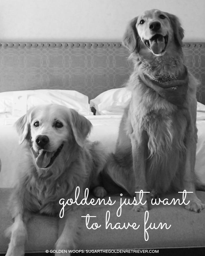 Golden Retrievers Slumber Pawty