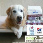 Pet Prepared To #BlogPaws Golden Thanks #HillsPet
