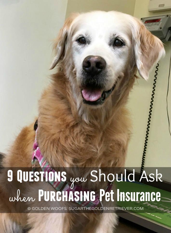 Pet Insurance Pets Best