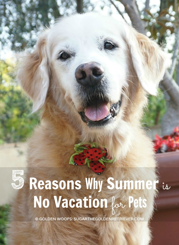 Pet Summer Hazards