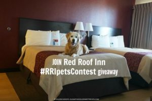 Red Roof Inn Pets Contest