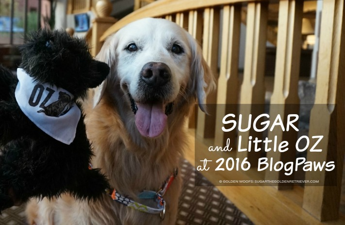 SUGAR Little OZ BlogPaws