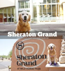 Sheraton Grand Arizona