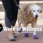 Woofs for #WeekOfWellness Samples