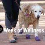 Woofs for #WeekOfWellness Samples