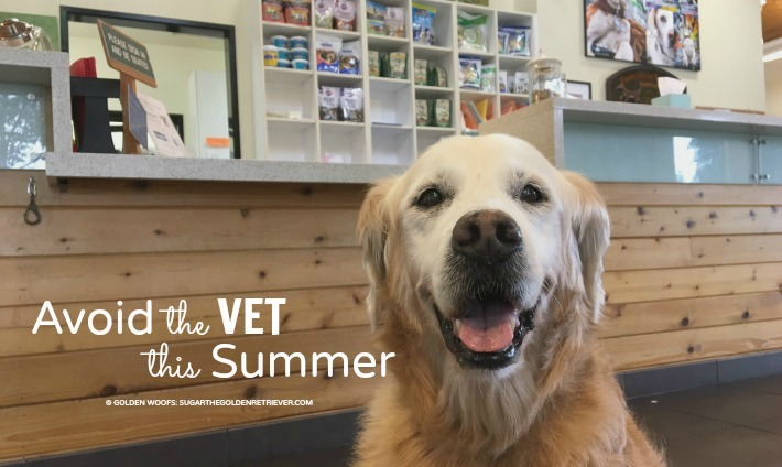 avoid vet this Summer