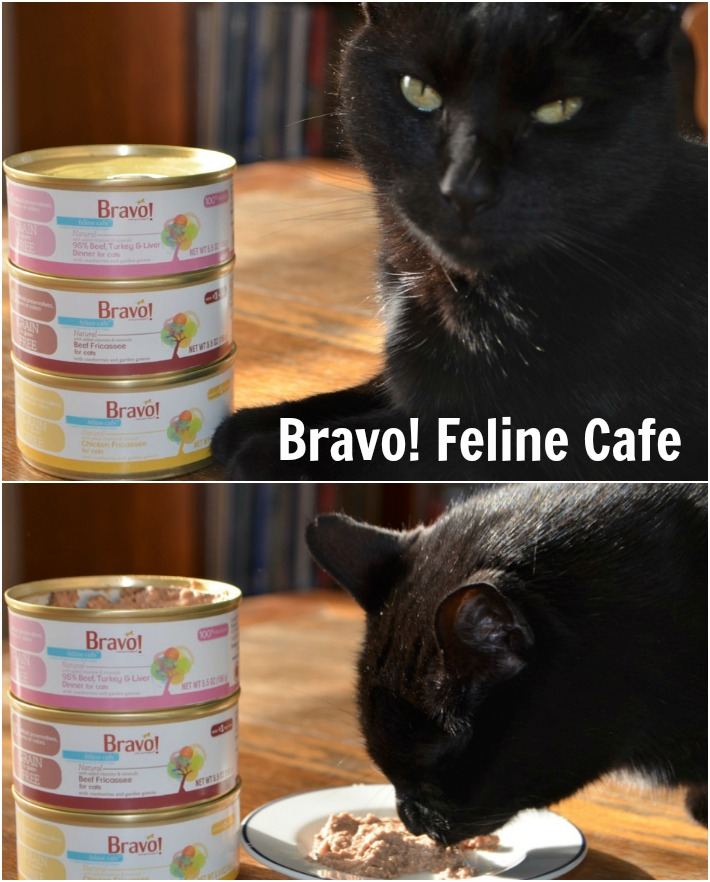 BRAVO Pet Foods Feline Cafe