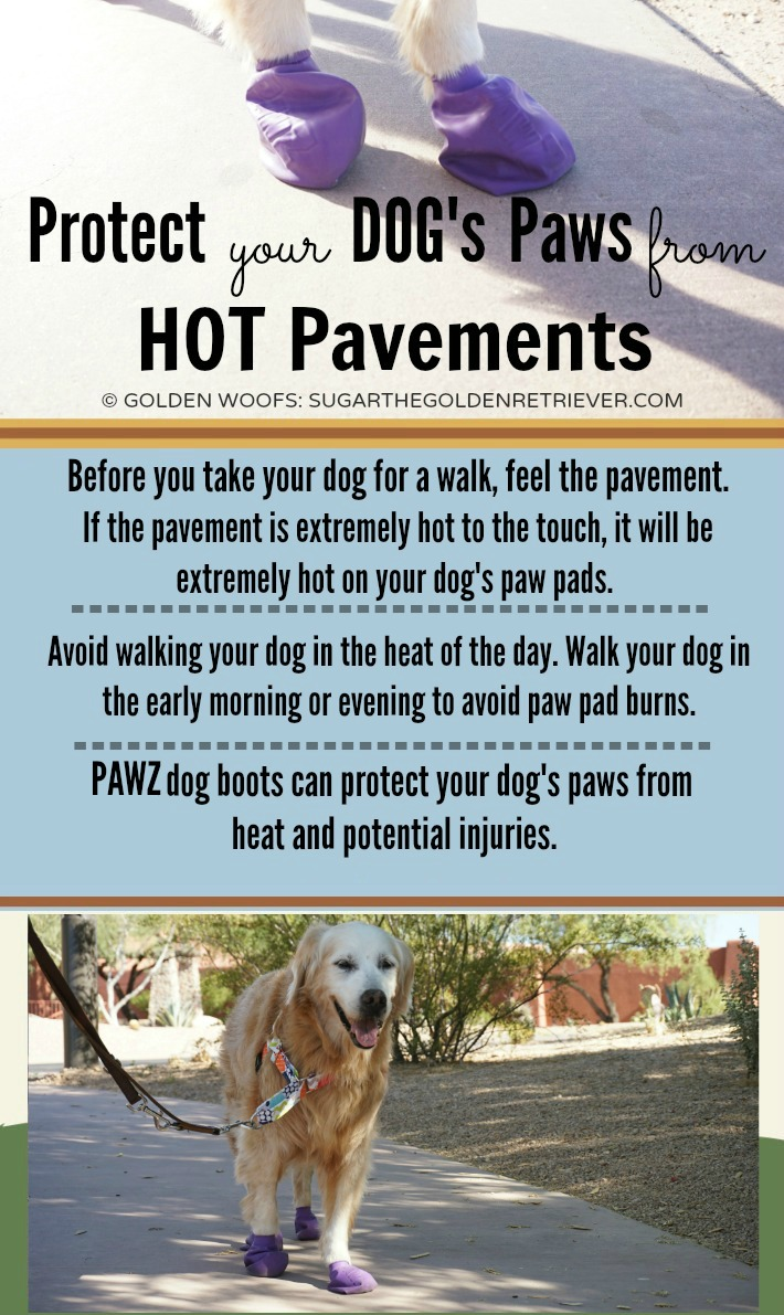 Infographic Dog's Paws Hot Pavements