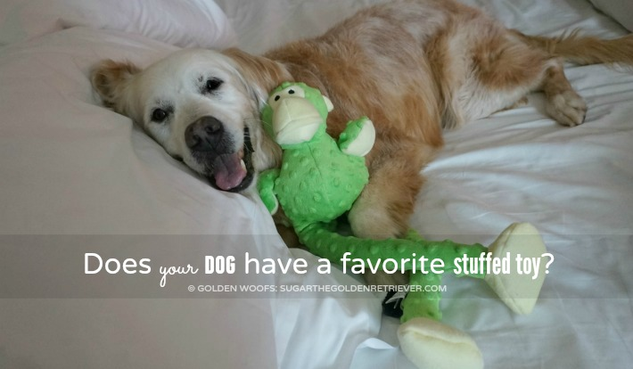 Does your dog have a favorite stuffed toy?