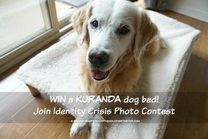 WIN Kuranda Dog Bed   Identity Crisis Photo Contest