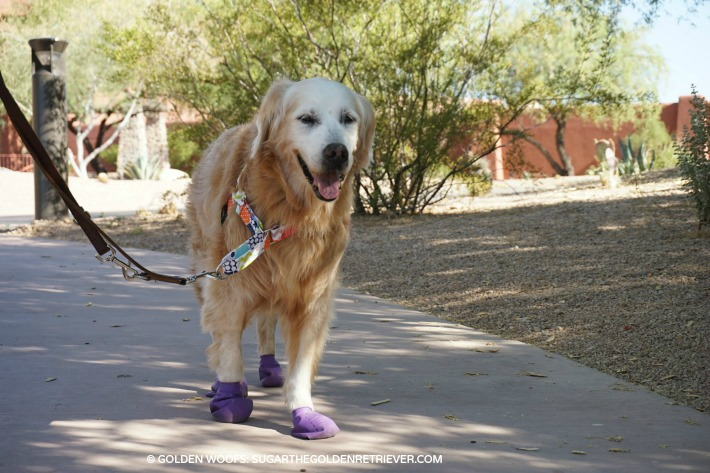 pawz dog boots hot pavements