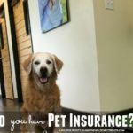 Do You Have Pet Insurance? #PetsBest