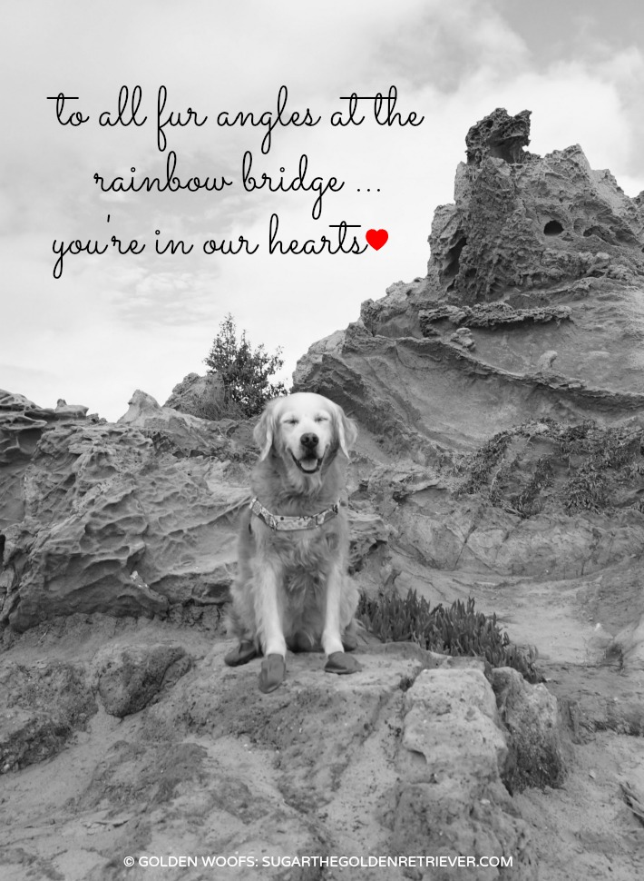 To All Fur Angels At The Rainbow Bridge