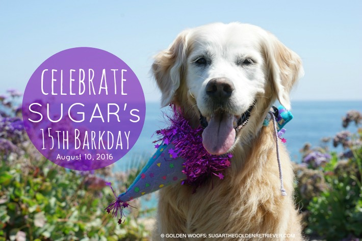 Celebrate SUGAR's 15th Barkday