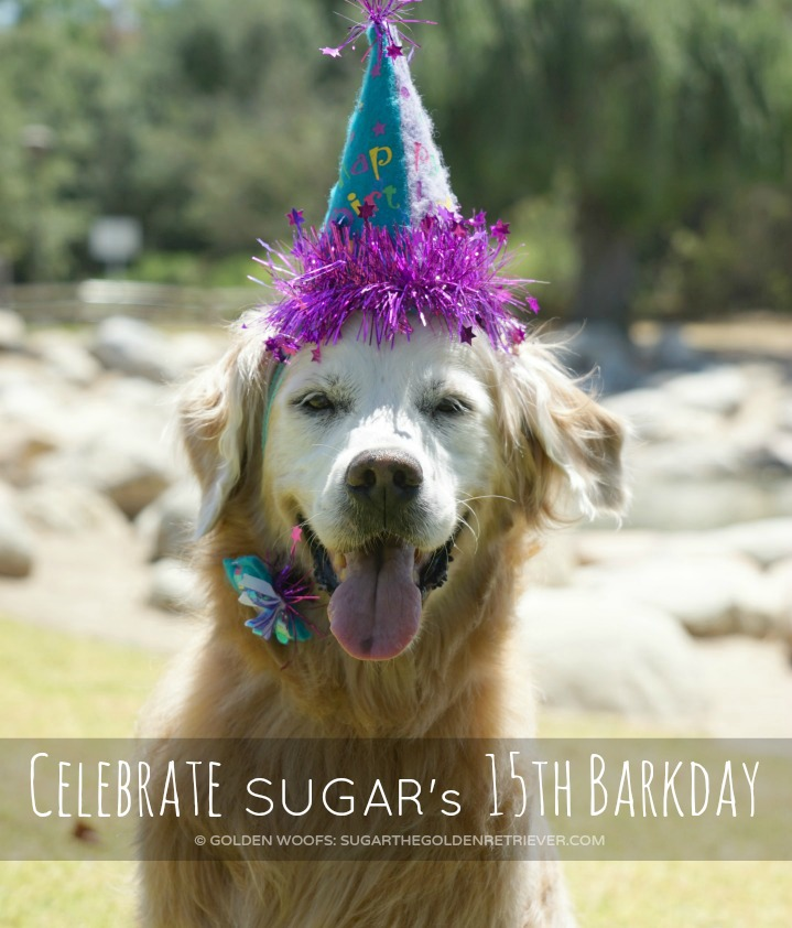 Celebrate SUGAR 's 15th Barkday