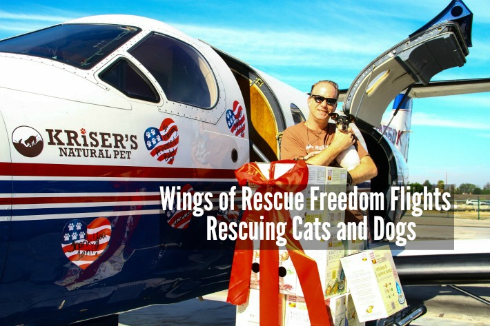 Wings of Rescue Freedom Flights Rescuing Cats and Dogs
